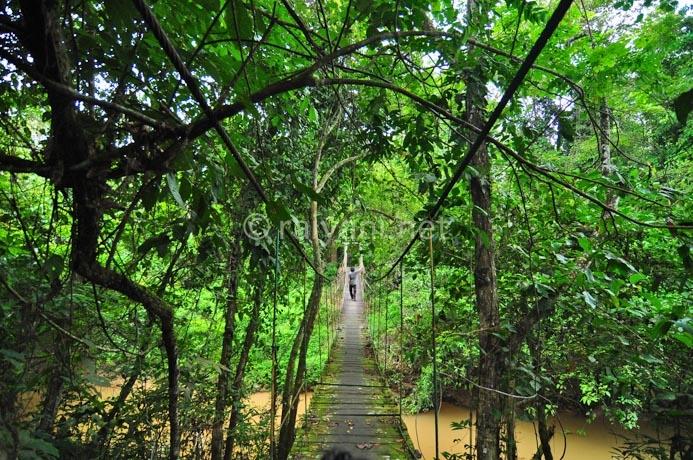 jembatan-taman-nasional-kutai
