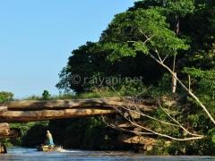 jembatan-kayu-ulin-sangata