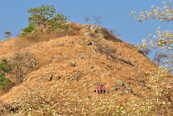 pulau-kenawa-dari-atas-bukit