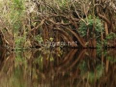 wetland-danau-sentarum