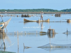 nelayan-tambak-madura