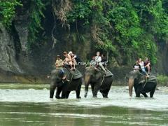 wisata-gajah-tangkahan