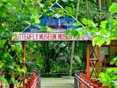 museum-penangkaran-kupu-kupu-bantimurung