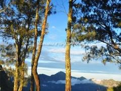 pepohonan-rinjani