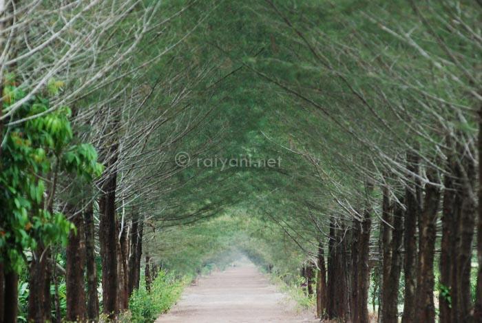 hutan buatan bangka bangka belitung