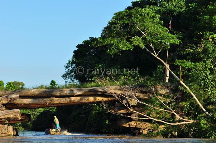 jembatan kayu ulin sangata east kalimantan