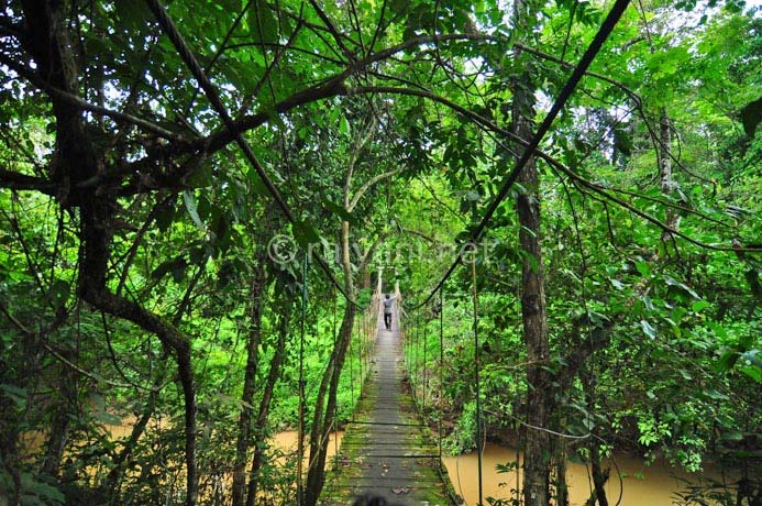 jembatan taman nasional kutai east kalimantan