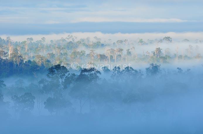 kabut dari gua tewet east kalimantan
