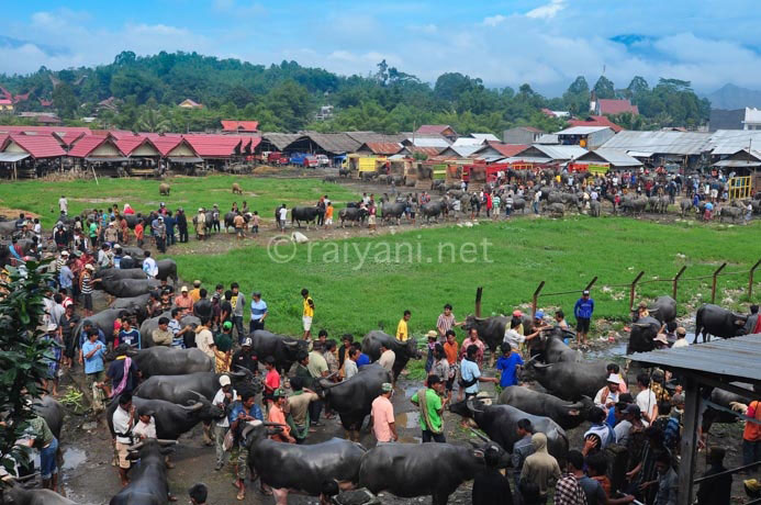 pasar bolu south sulawesi