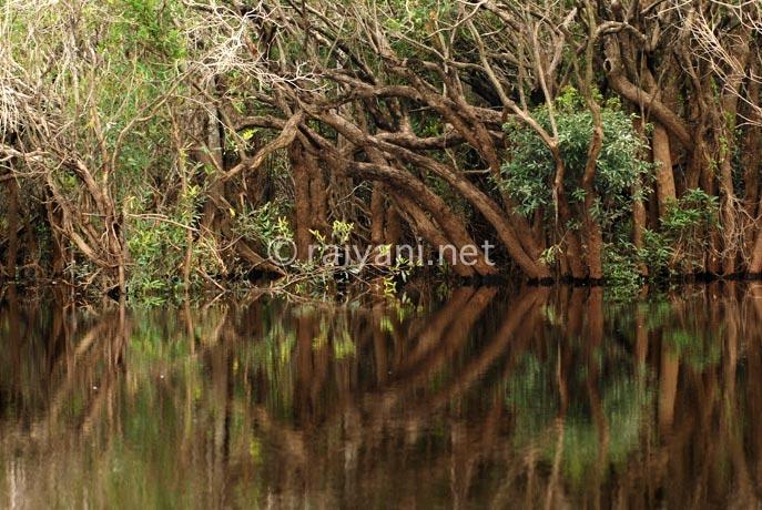 wetland danau sentarum west kalimantan