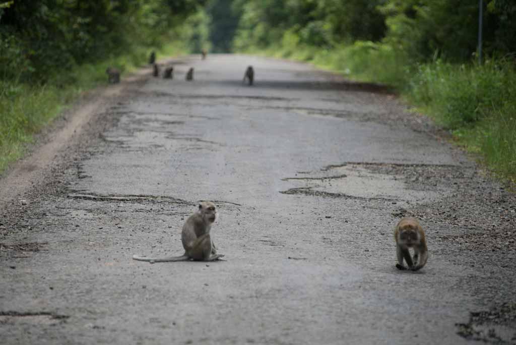 Jalanan menuju gerbang utama yang banyak dihuni monyet 5878