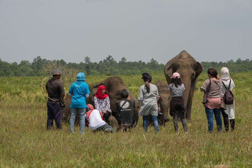 Melihat Gajah dari dekat 6000